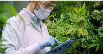 Medical cannabis for cancer Online
