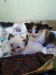 BEAUTIFUL KITTENS! (GARDENA)