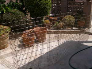 Pet play pen - $50 (Long Beach)